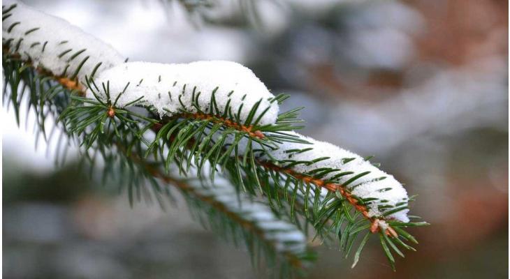 Haag planten winter