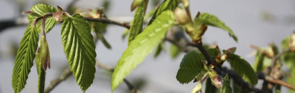 Inheemse haagplanten bestellen