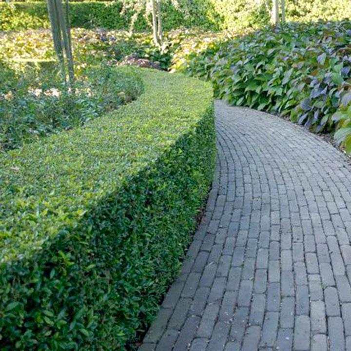 Formele en informele hagen voor moderne tuinen