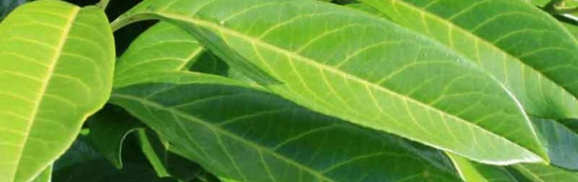 haagplanten snel groeien