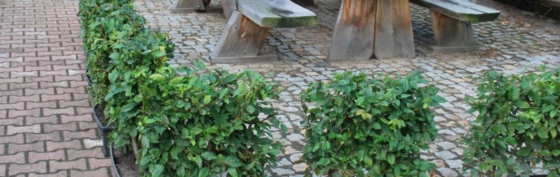 Kant-en-klaarhagen planten