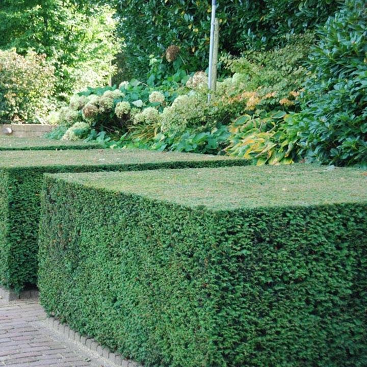 Moderne hagen