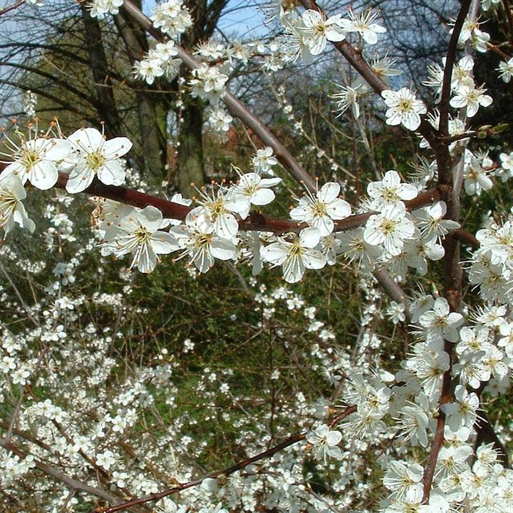 Onderhoudsarme natuurlijke tuinen