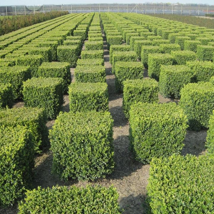 Tuinplanten soorten